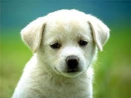 Par où commencer l'éducation à la propreté de votre chien ou chiot ?